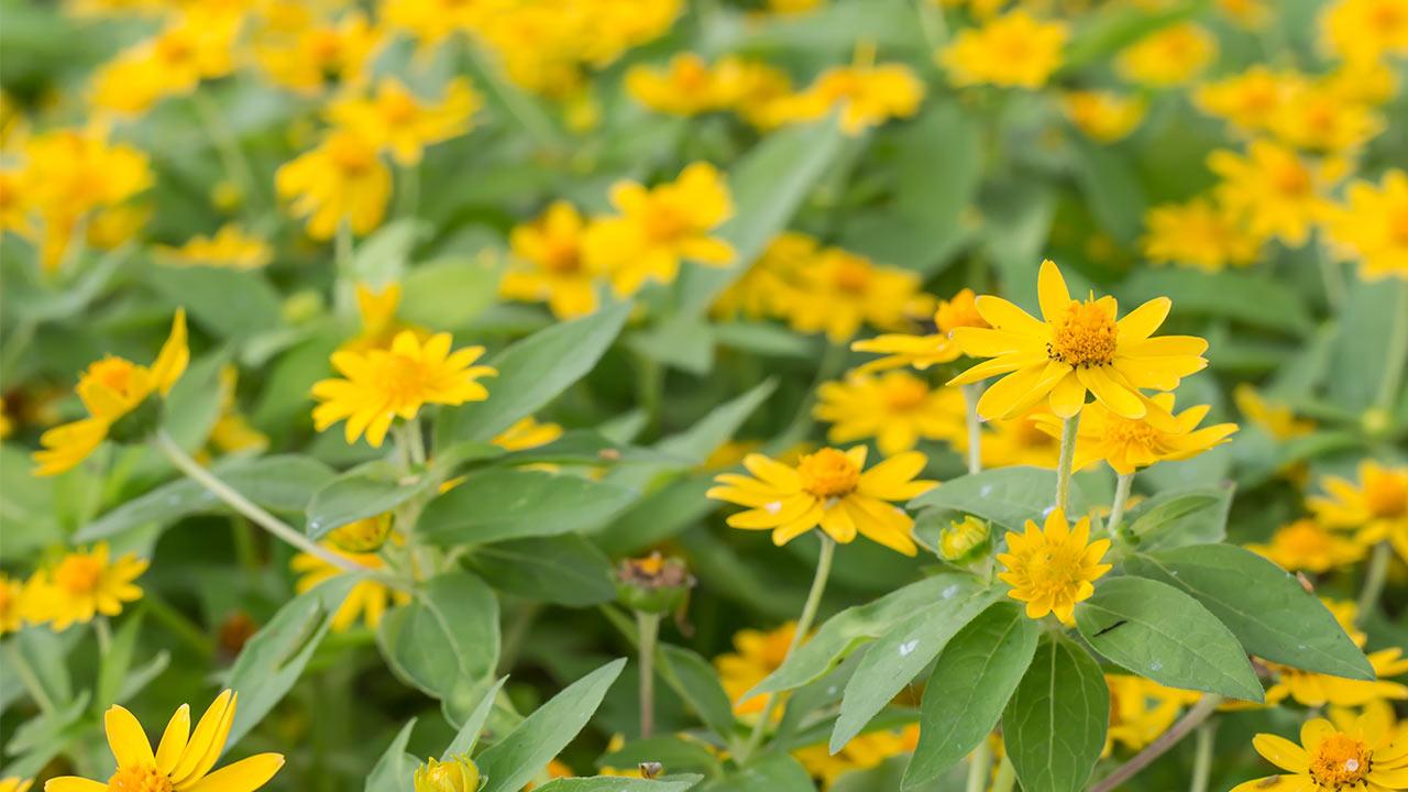 Nova Secció: Les Plantes A La Farmàcia